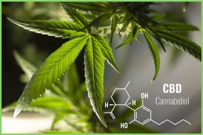 What is CBD Oil? A Quick CBD Guide for 2020